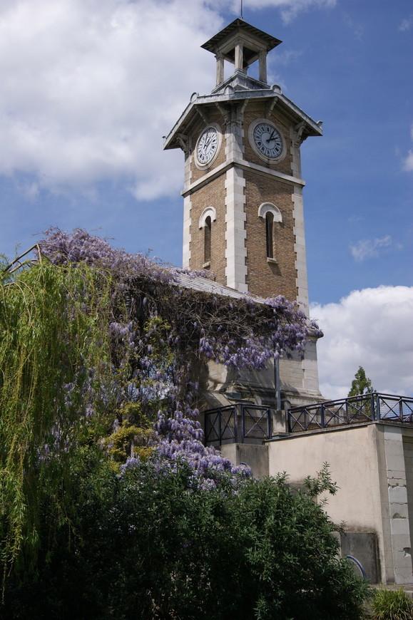 В этом же самом парке расположилась церквушка, вся увитая пышно цветущей глицинией. Ну, просто глаз не оторвать!