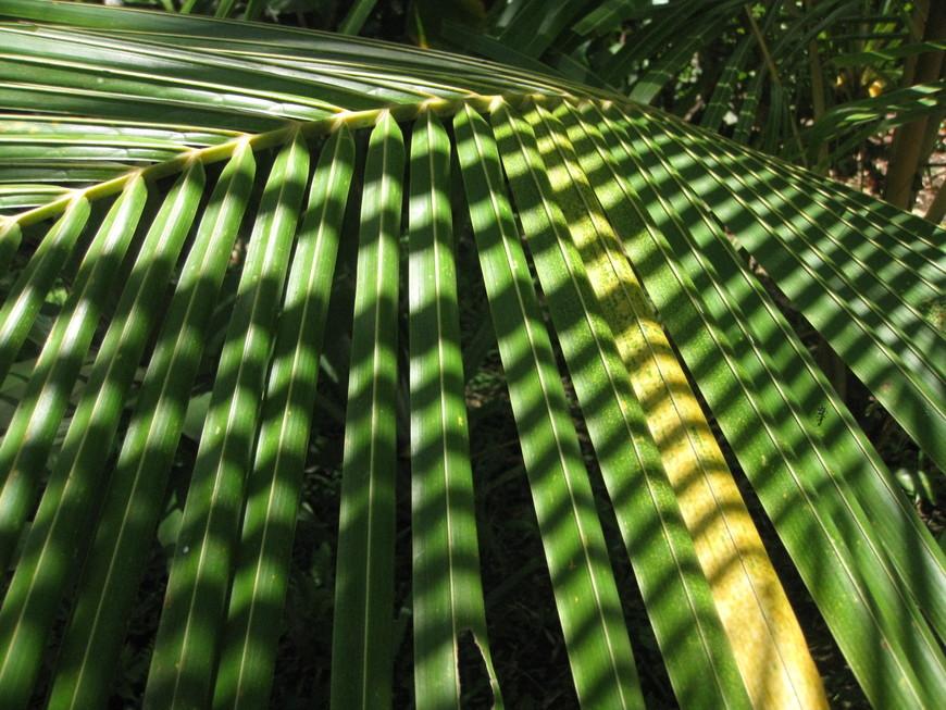 Полоски на кокосе