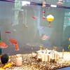Аквариумные рыбки, нет я не предлагаю их есть! Но предлагаю почувствовать себя как рыбки в воде в городе Амстердаме