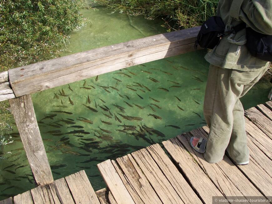 Рыбу ловить тоже нельзя.