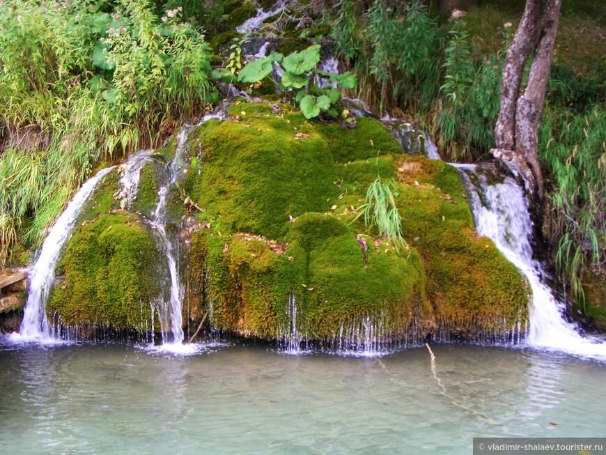 Повсюду воду окружает зелень: кустарники, касающиеся водной глади, травы, растущие на суше и под водой,  и мхи.