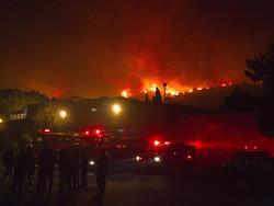 В Израиле жителей эвакуируют из-за лесных пожаров