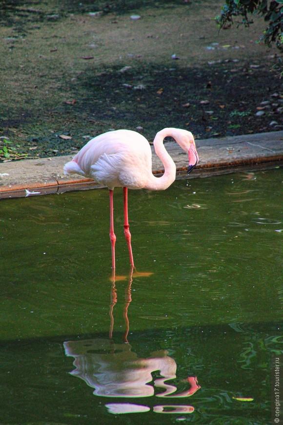 А фламинго напомнили, как давно и как безрезультатно я мечтаю вернуться в Африку...