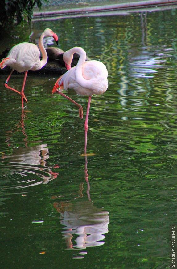Ну как я могла пробежать мимо! И фламинго, осознавая свою красоту и изящество, разрешили мне пофотографировать их и даже любезно согласились позировать...