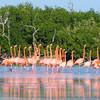Фламинго в Рио Лагартос