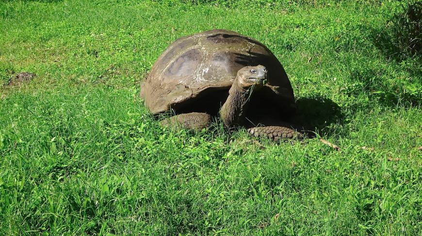 черепаха!.JPG