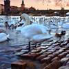 Все красоты Златой Праги. Большая обзорная пешеходная экскурсия. Лебеди на Влтаве. Малая Страна.Экскурсии с частным индивидуальным гидом по Праге.