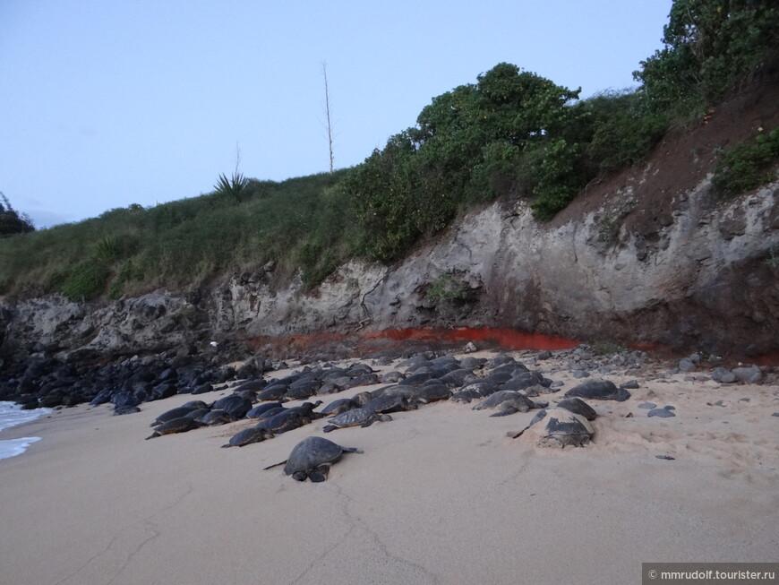 черепаший пляж-выползают на ночёвку