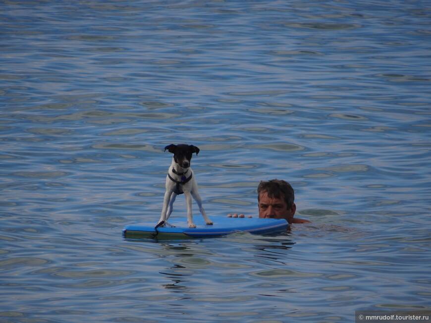 пёс-сёрфер