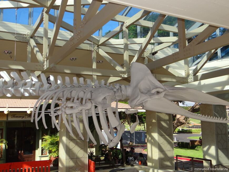 скелет кита