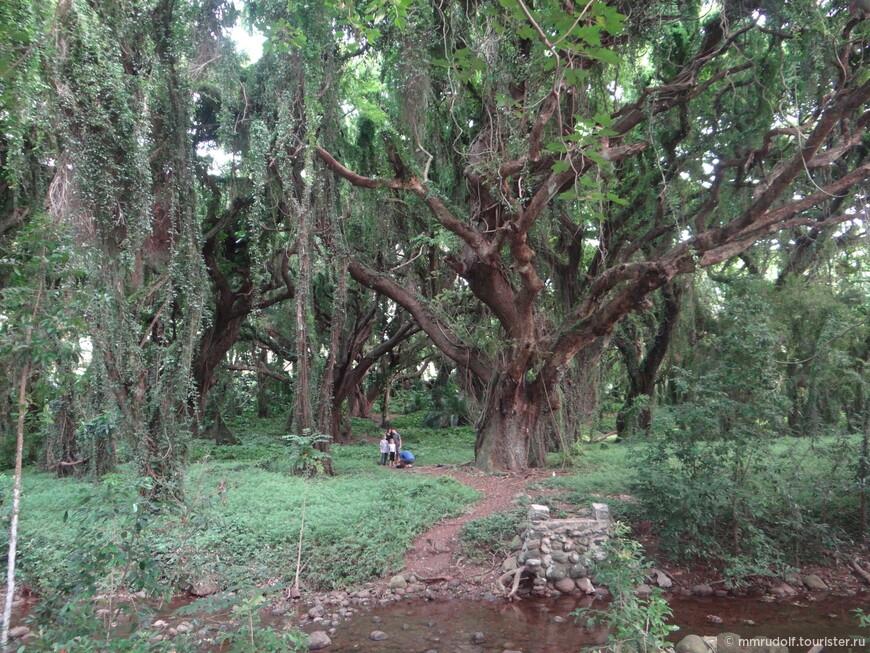 шагающее дерево