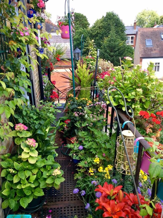 Каждый год аранжировка цветов меняется. Горшки с отцветшими растениями постоянно меняются на что-нибудь готовящееся распуститься.