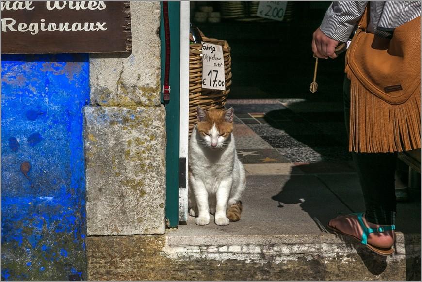 """А это - главный герой интернетовских фото Обидуш.  Сколько бы я ни читала отзывов, везде этот таинственный кот  сделает свою """"отметину""""."""
