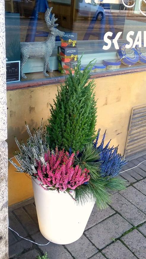 Олени, елки и икра - неотъемлемые атрибуты приближающегося Рождества.
