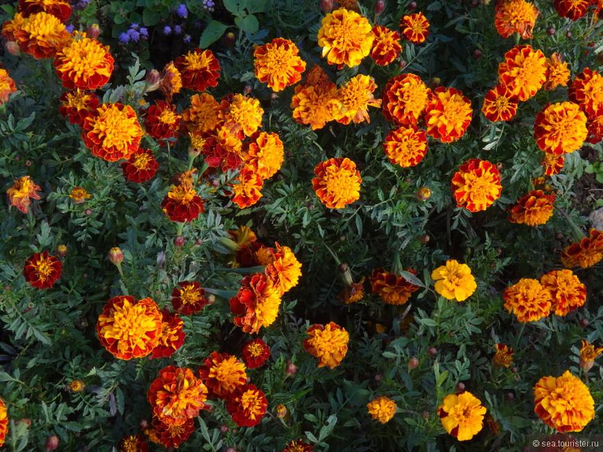 и еще раз цветы