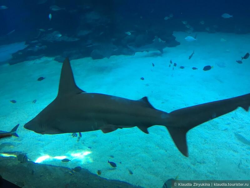 Подводное царство Красного моря, Океанариум