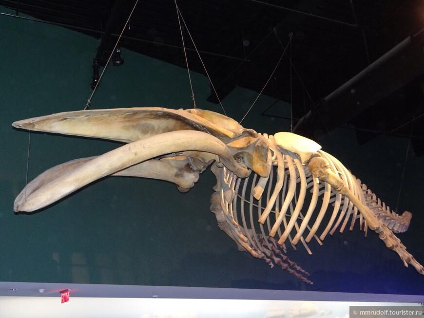 на входе висит небольшой скелет кита