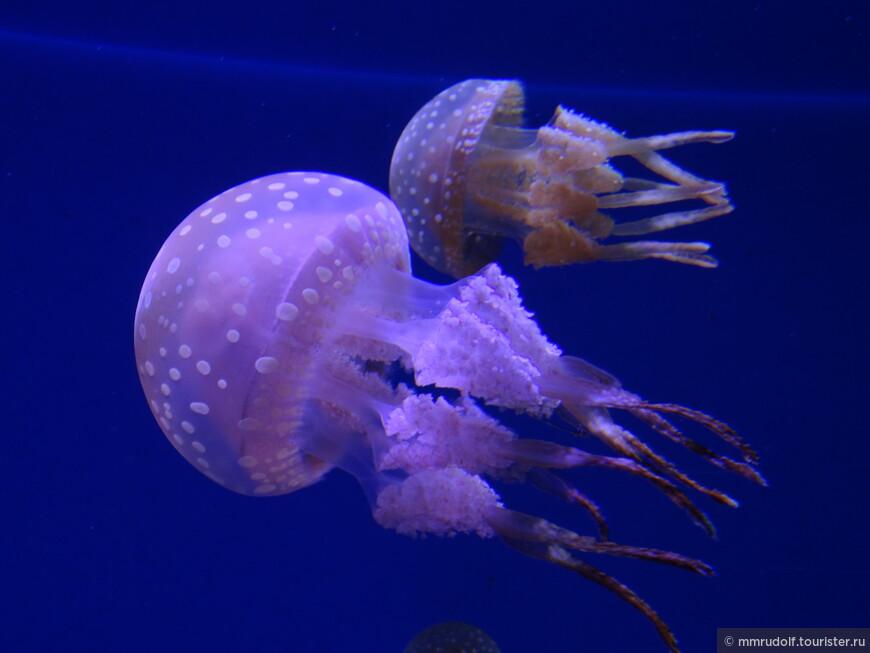 целый зал посвящён медузам
