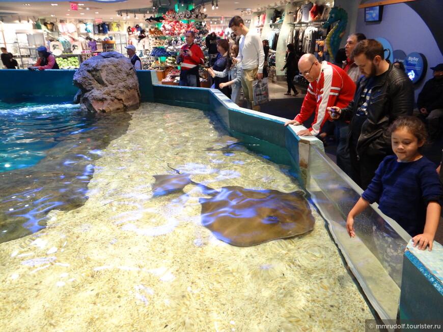 выделен специальный бассейн,в котором можно потрогать скатов,проходит их кормление и небольшое шоу