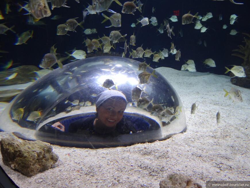 есть пара аквариумов с обзорным куполом,чтобы посмотреть изнутри