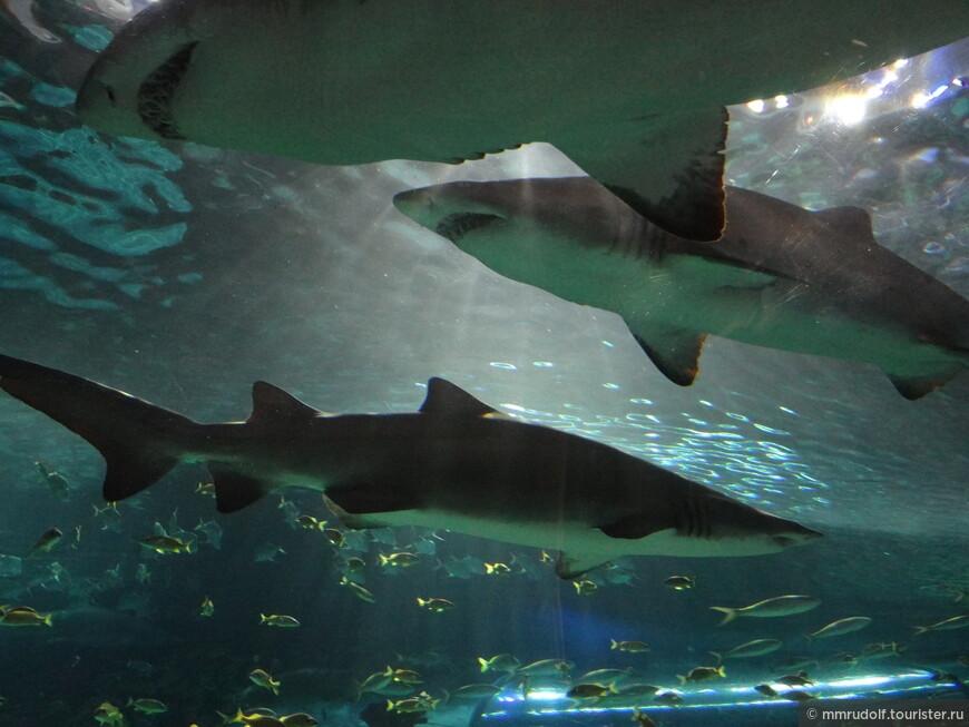основной аквариум ОЧЕНЬ БОЛЬШОЙ,где основные обитатели акулы и скаты