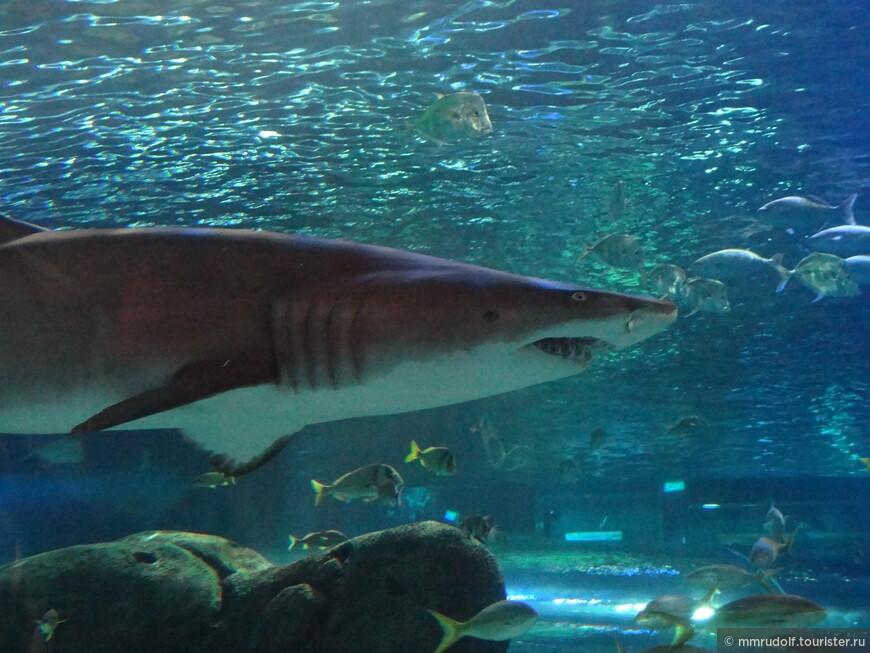 прямо вплотную можно заглянуть в пасть акуле