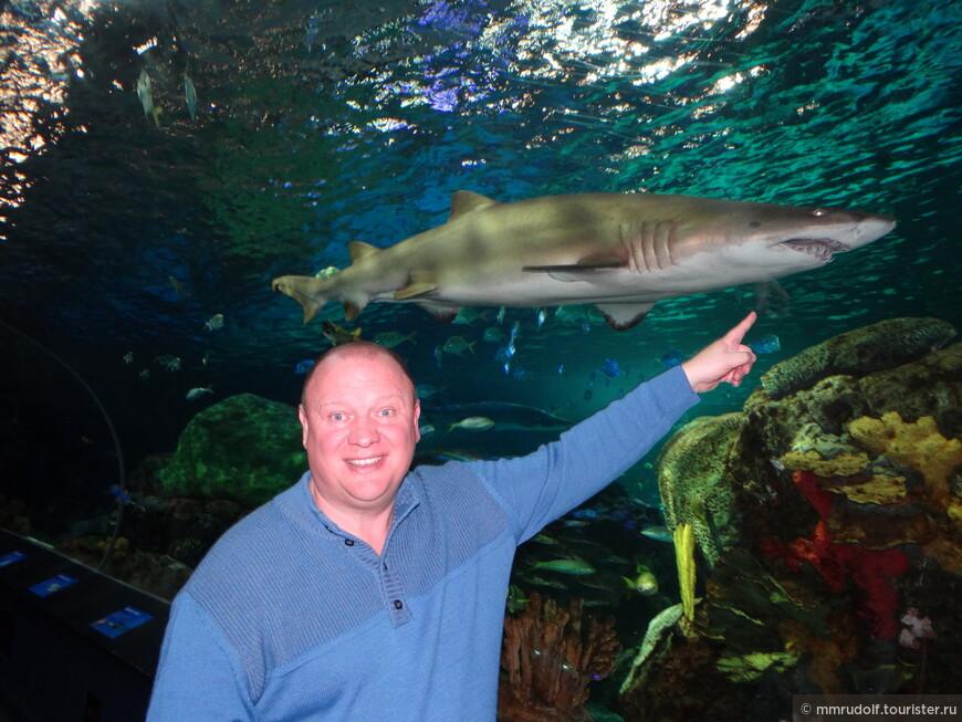 внутри аквариума проходит тоннель с подвижным эскалатором