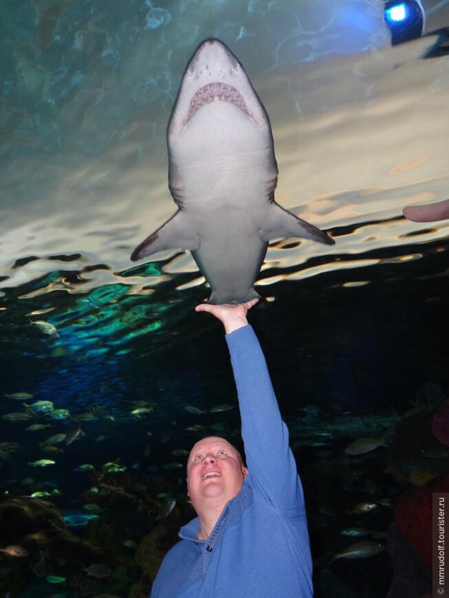 когда акулы проплывают над твоей головой