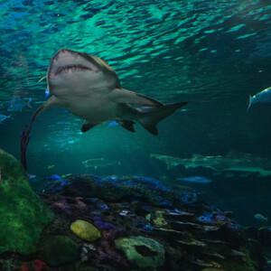 Торонто, аквариум Рипли