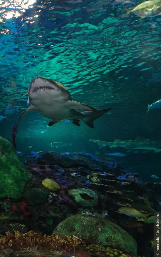 акула есть акула