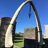 Семиметровая челюсть синего кита вместо ворот в один из домов острова Льюис