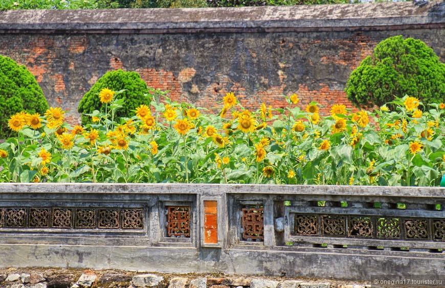 Под старой крепостной стеной я нашла дивный сад подсолнухов и долго ждала, когда его оставят в покое любители селфи.