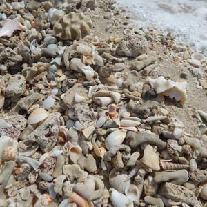Доминикана.Пляжный отдых в Хуан-Долио.
