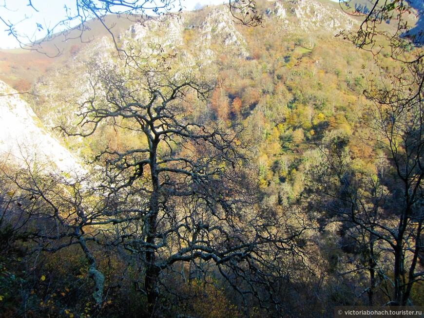 поход наш проходил в середине декабря и большинство деревьев уже сброило листву