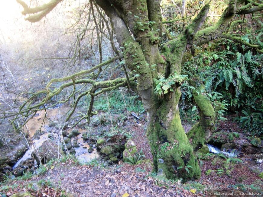 деревья из сказки