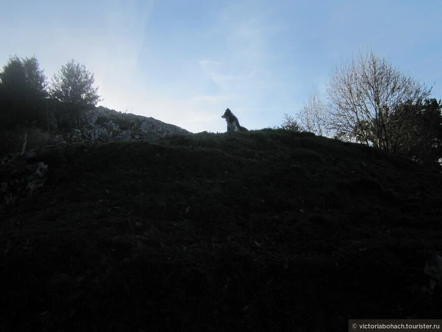 помощник пастуха на страже