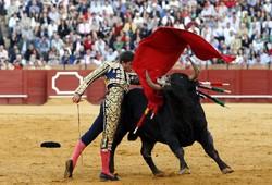 Коррида в Испании не так популярна, как принято считать