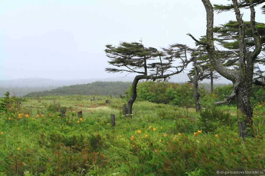 Сахалин и деревья.JPG