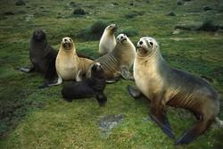 Туриста в Новой Зеландии атаковали тюлени