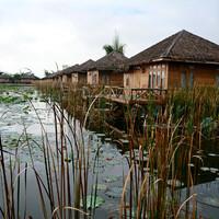 Домики стоят  у воды, вокруг плавают кувшинки, покрытые каплями росы