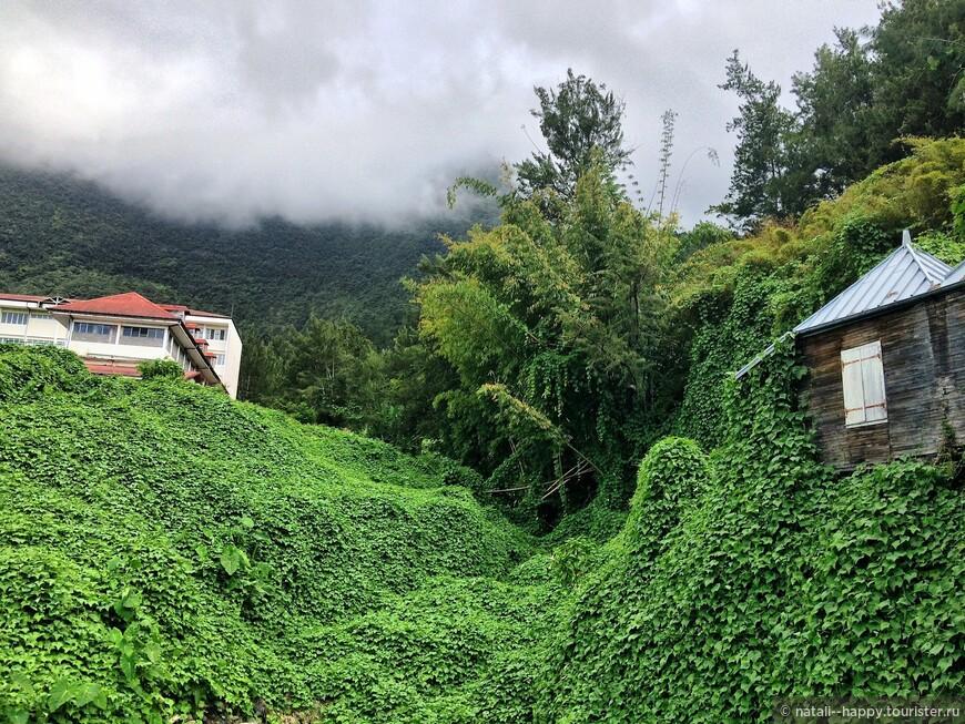 Дикие заросли овоща шу-шу уже практически полностью захватили вулканический цирк Салази