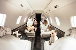 «Аэрофлот» ужесточил правила перевозки животных