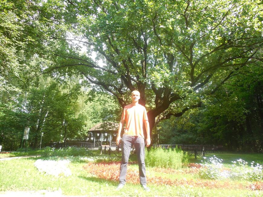 Остров-заповедник «Серебряный бор»: парк «Ветеран» - Лемешевская поляна: дуб, под которым отдыхал знаменитый певец Лемешев