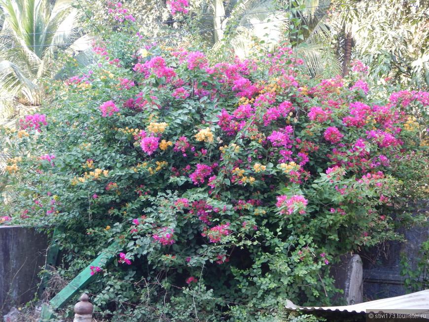 Сезон дождей закончился совсем недавно, природа еще вся цветет...
