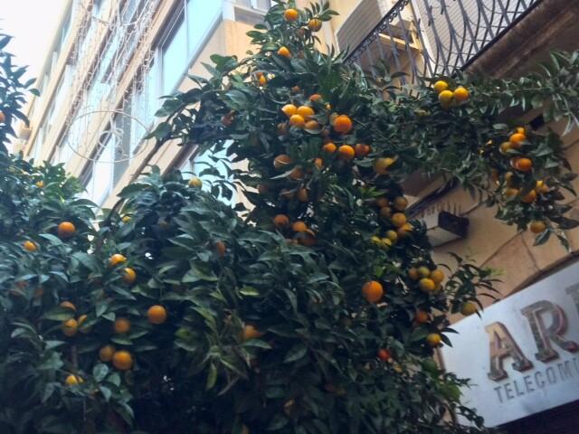 Апельсины дозревают, как никак скоро-скоро Рождество...