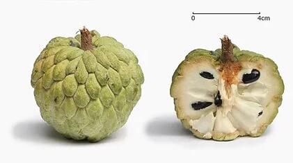Какие фрукты есть на острове Хайнане (г. Санья)