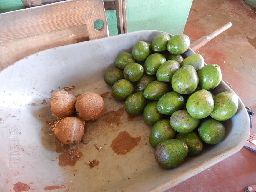 натюрморт в тележке-три кокоса и авокадо.Цены на фрукты в стране очень высокие,овощи на прилавках не совсем хорошего качества.