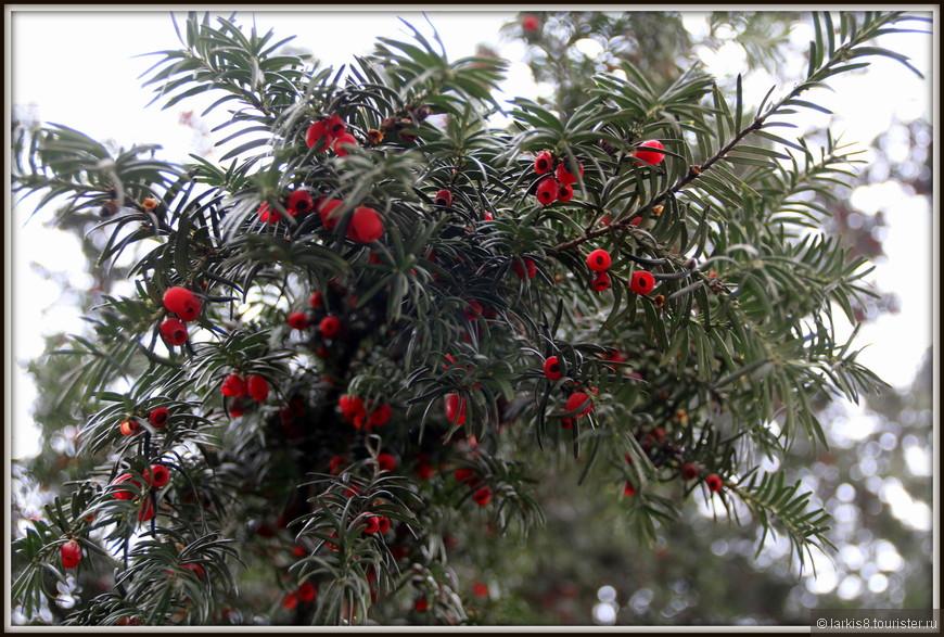 Некоторые растения были украшены натуральными рождественскими украшениями!