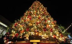 На Шри-Ланке установлена самая высокая в мире рождественская ель