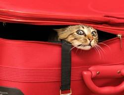 Туристка тайно провезла своего кота в самолёте